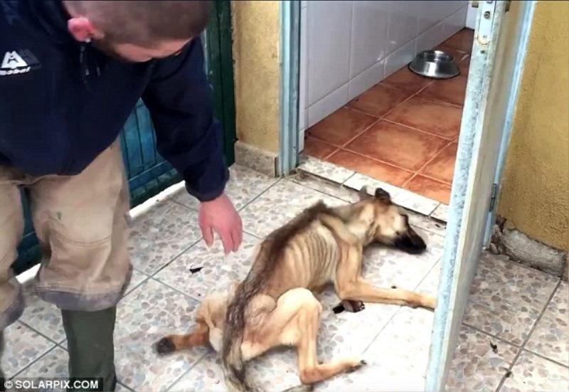 Močno shujšana psička je skoraj poginila.