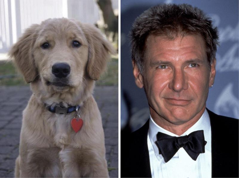 18. Harrison Ford in kuža. Težko se je odločiti, kdo od njiju je bolj luškan. :)